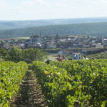 Le vilage de Coulanges la vineuse et une vigne de Pinot Noir