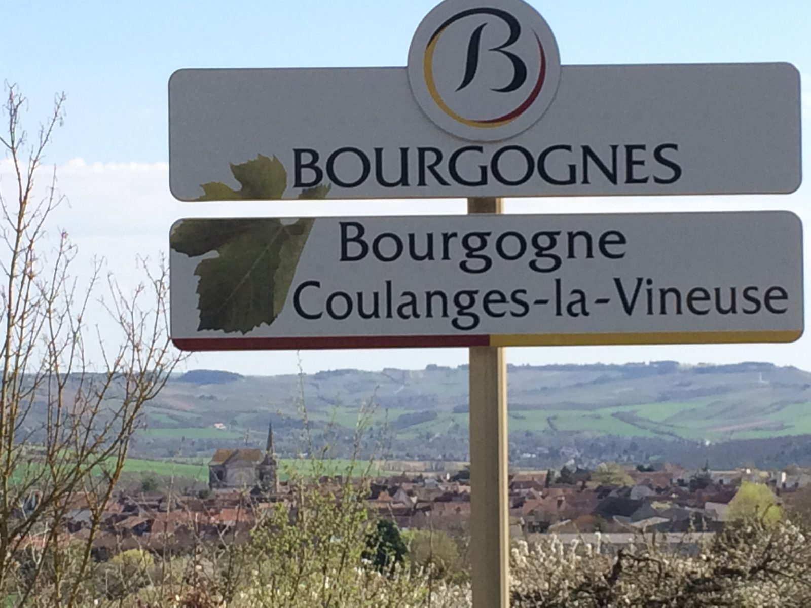 AOC Coulanges la Vineuse