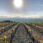 paysage viticole de Coulanges la Vineuse